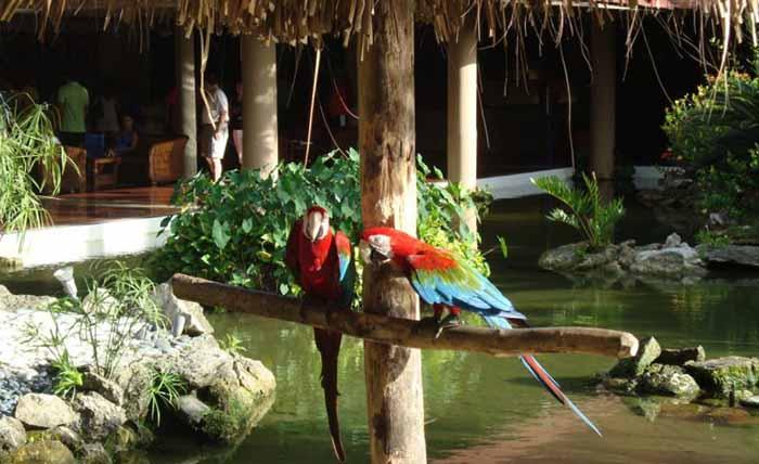 Araras do Bavaro Princess Hotel em Punta Cana