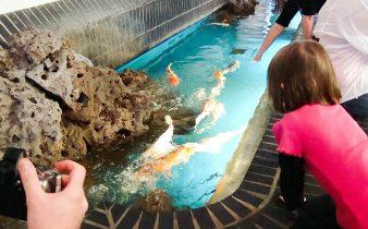 Berlim - aquário