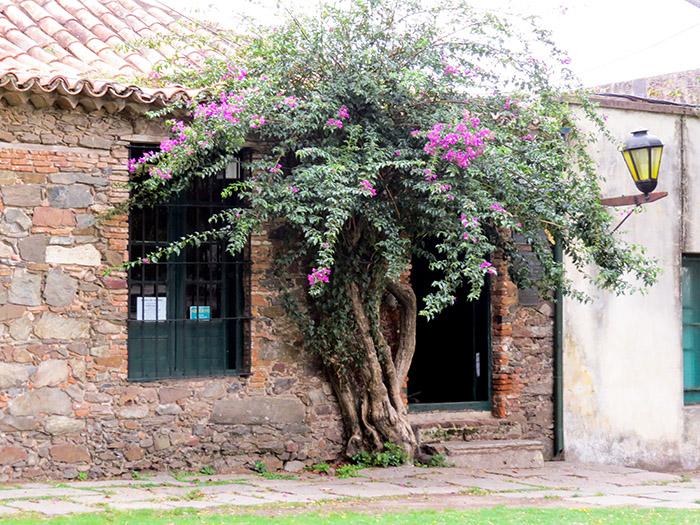 Museu Português