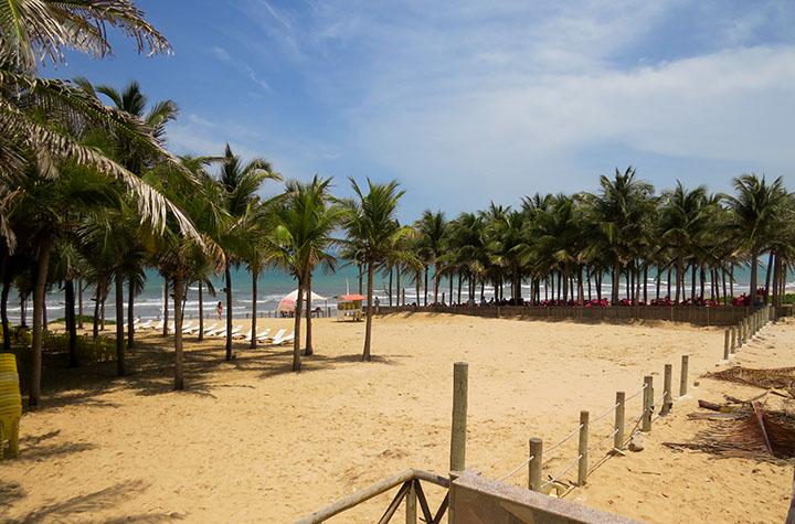 O coqueiral em frente à barraca Chega Mais Beach, em Canoa Quebrada, Ceará