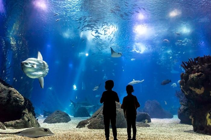 O aquário central do Oceanário de Lisboa encanta todos