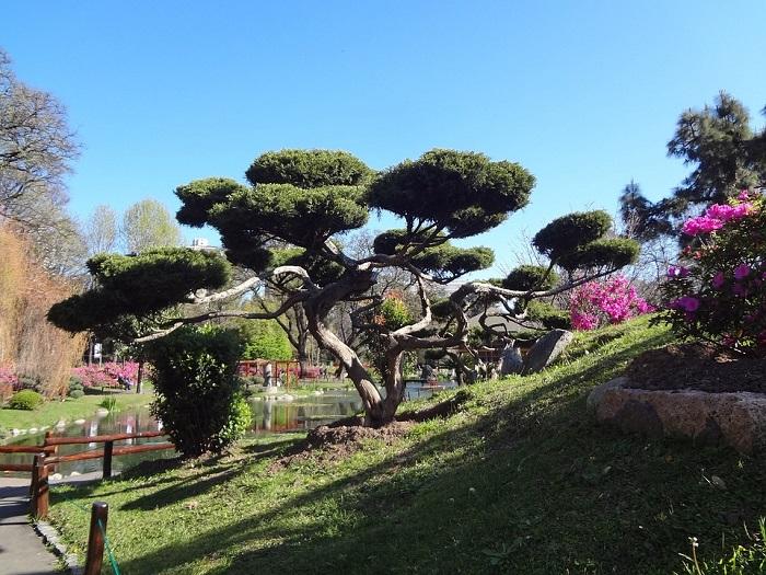 A vegetação que remete ao ambiente natural japonês
