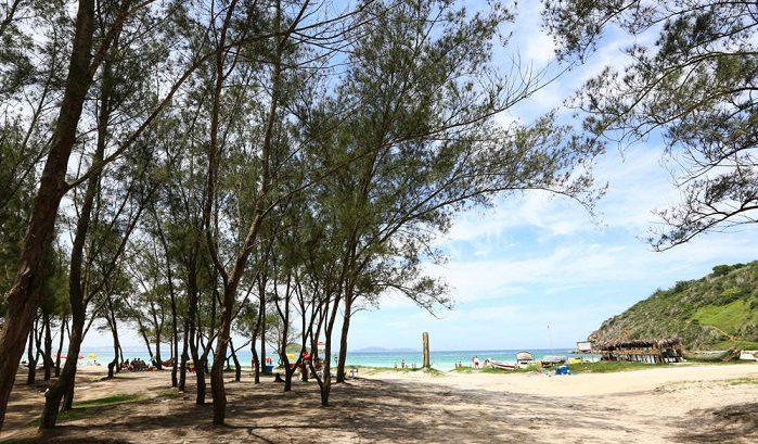 As árvores da Praia do Pontal, em Arraial do Cabo