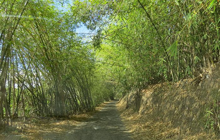 Alto dos Moura, em Japaratinga, Alagoas